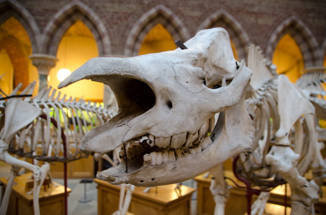 oxford-university-museum-of-natural-history