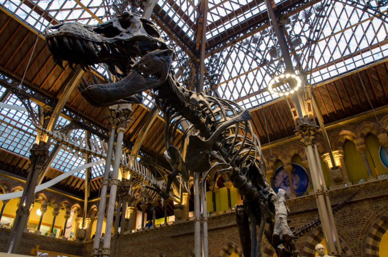 t-rex-oxford-university-museum-of-natural-history
