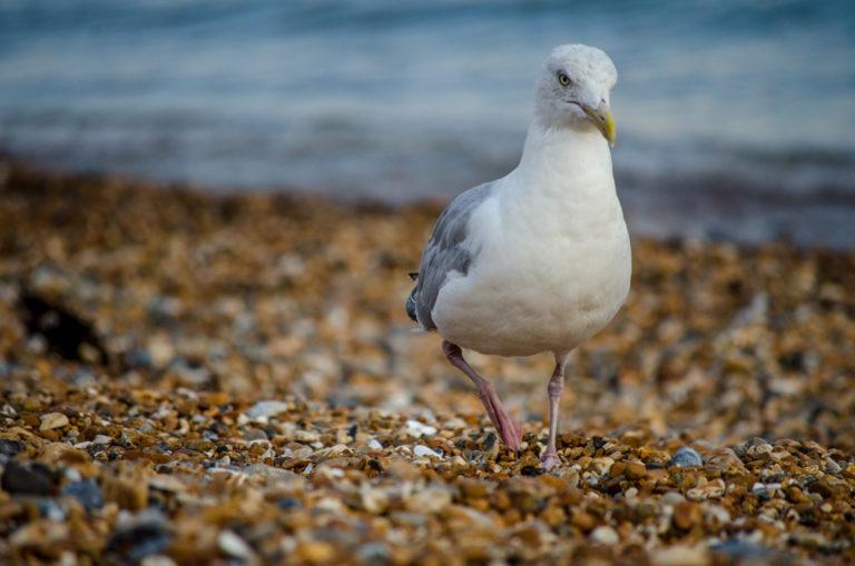 Plage Brighton
