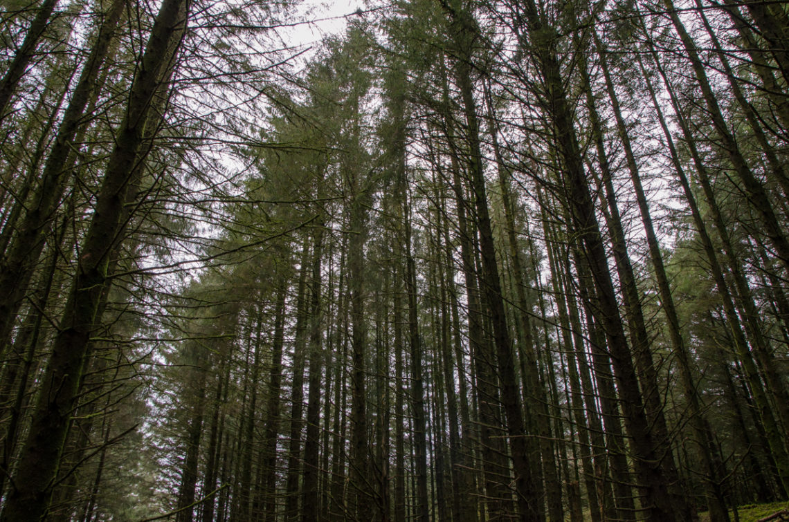 Randonnée Witsman's Wood