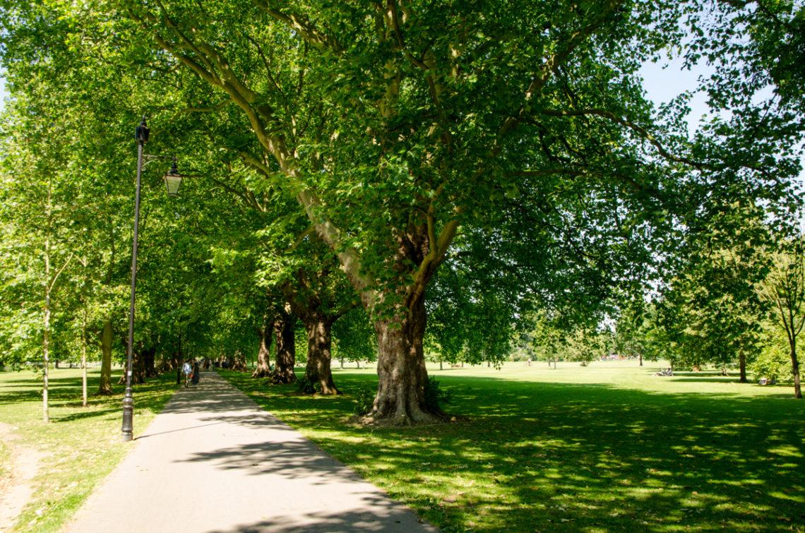 Arbres dans un parc